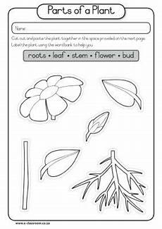worksheets plants and seeds 13503 members only parts of a plant plant lessons science lessons