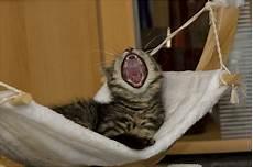 gute nacht die 2te foto bild tiere haustiere katzen