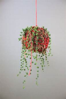 indooroutdoor hanging moss balls filled with plants neon pink hanging moss string planter with string of