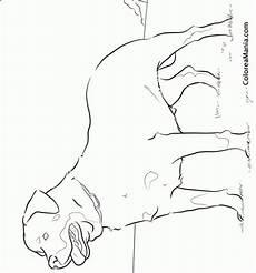 Ausmalbilder Hunde Rottweiler Colorear Perro Rottweiler Animales Dom 233 Sticos Dibujo