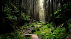 Nature Path 4k Wallpaper by Forest 4k Ultra Hd Wallpaper Background Image