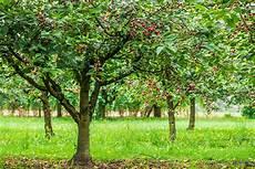 Comment Tailler Le Cerisier Gamm Vert