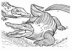 Malvorlagen Tiere Krokodil Ausmalbilder Krokodil Malvorlagen Ausdrucken 1