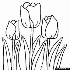 tulip coloring pages print color craft