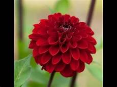 mail time garden guide april 2018 dahlia planting and