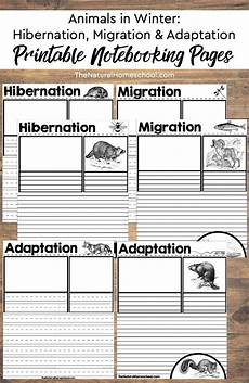 animal migration worksheets 14057 printable hibernation migration and adaptation notebooking pages