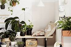 Pflanzen Zu Hause - indoor plants 10 best house plants better homes and gardens