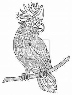 ausmalbilder erwachsene papagei kostenlos zum ausdrucken