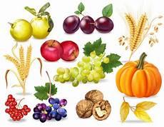 Malvorlagen Herbst Obst Herbst Obst Und Gem 252 Se Sammlung Premium Vektor