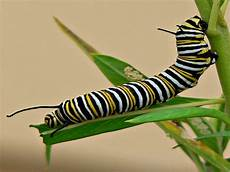 Insect Caterpillar Wallpaper by Insect Wallpaper Pack 2 1024x768 All Entry Wallpapers