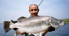 Morfologi Dan Taksonomi Ikan Kakap Putih Lates Calcarife