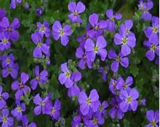 blumen klein flowers wallpapers