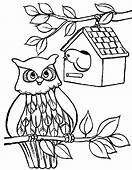 An Owl Bird House Coloring Pages  Best Place To Color