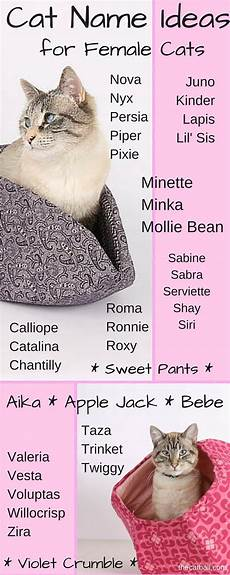 weibliche namen cat name ideas for cats the cat