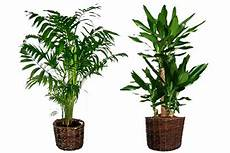 Plantes Vertes Pas Ch 232 Res Scoooter Gt