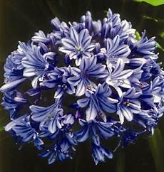 fiori e fleurs d eventi le stagioni dei fiori
