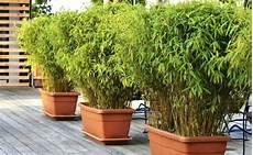 haie pour terrasse plante en pot terrasse pot a plante exterieur quelle