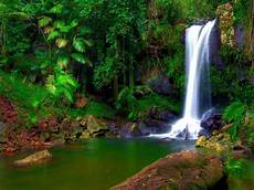 wonderful tropical waterfall jungle green tropical vegetation palm trees rocky shore rocks moss