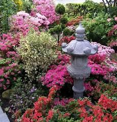 welche pflanzen klären den teich pflanzen japanischer garten anlegen