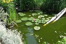 the best fish pond plants garden ponds lakes