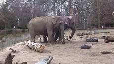 am zoo tańczące słonie w zoo we wrocławiu