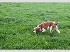 stomach virus in dogs