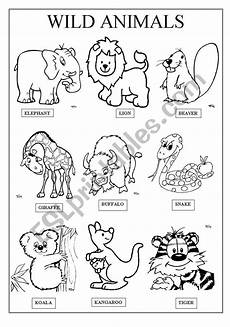 animal worksheets to colour 14048 animals esl worksheet by famosa