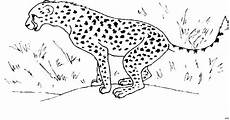Ausmalbilder Leopard Ausdrucken Leopard Auf Der Jagd Ausmalbild Malvorlage Tiere