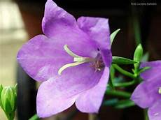 fiori lilla nomi indice alfabetico delle piante e fiori presenti nel sito
