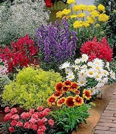 Pflanzen Günstig - bunter staudengarten 9 pflanzen garten ideen