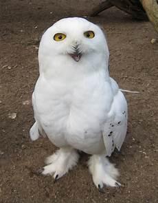 eine lustige eule foto bild tiere zoo wildpark
