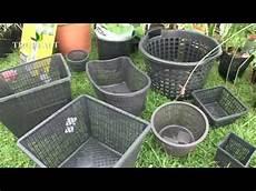 pour bassin aquatique structurer bassin avec des plantes aquatiques