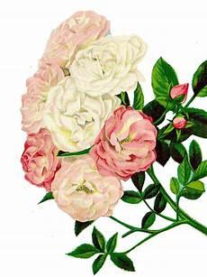 clipart photo roser clipart blomster 183 gratis foto p 229 pixabay