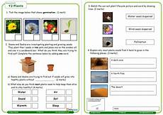 science plants ks1 worksheets 13580 plants worksheet for year 2 science teachwire teaching resource