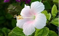 White Flowers Hd Images by White Flowers Hd 15 Free Wallpaper Hdflowerwallpaper
