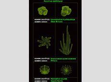 Desert Plants 2D DWG Block for AutoCAD ? Designs CAD
