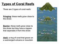 of wetlands coral reefs and sea grass beds for coastal development what are