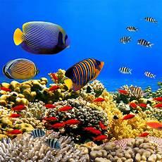 Ini 4 Nirwana Laut Indonesia Yang Wajib Kamu Kunjungi