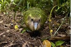70 Gambar Burung Dan Jenisnya Dari Berbagai Negara Dan