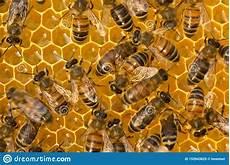 Malvorlagen Jungen Kostenlos Umwandeln Arbeit Jungen Bienen Innerhalb Des Bienenstocks
