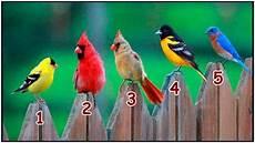 Tes Kepribadian Pilih Satu Gambar Burung Hasilnya Ungkap