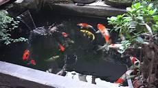 Kolam Ikan Koi Di Depan Rumah