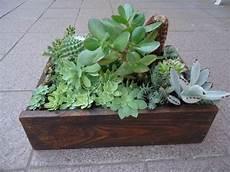 piante grasse in vaso composizione di piante grasse succulente 1