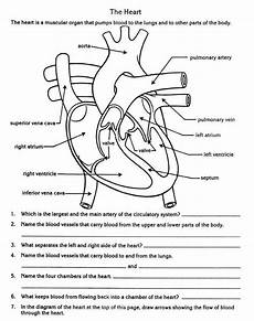 science worksheets for grade 7 igcse 12201 pin by pavel tania tlumach on nursing teaching biology science worksheets circulatory system