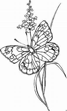Ausmalbilder Blumen Schmetterlinge Kleine Pflanze Schmetterling Ausmalbild Malvorlage Blumen