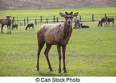 fallen antlers elk antlers on the ground