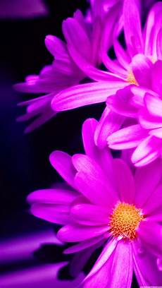 free flower wallpaper for phone smartphones 25 hd retina wallpaper collection of