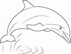 ausmalbild delfin show zum ausdrucken