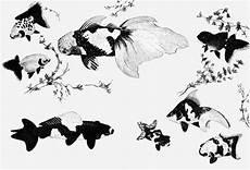 Dessin Poisson Japonais Poisson Japonais Dessin Sh61 Jornalagora