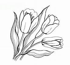 malvorlagen zum ausdrucken ausmalbilder tulpe kostenlos 1